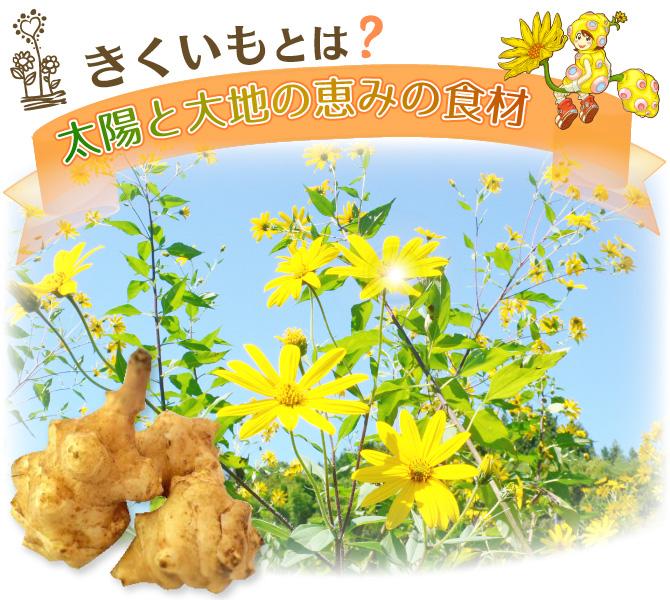 菊芋について   日本糖尿食研株...
